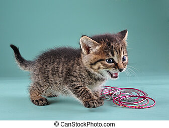 studio portrait of little kitten with Indian bracelets -...