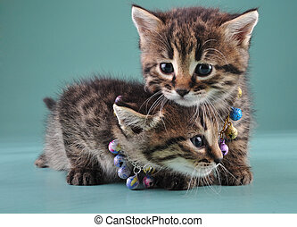 little kittens with small metal jingle bells beads - Little...