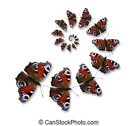 Butterflies flying in spiral on the white background