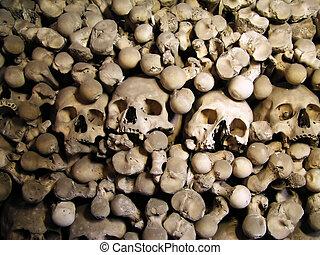 crânios, ossos