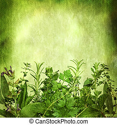 Herbal Background with Grunge Effects - Herbal background,...