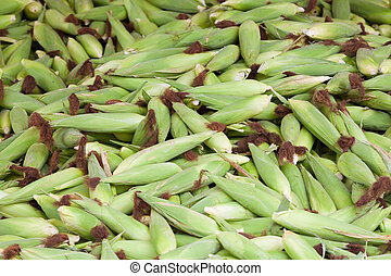 Pile of corn husk