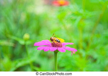 Bee on pollen of pink flower