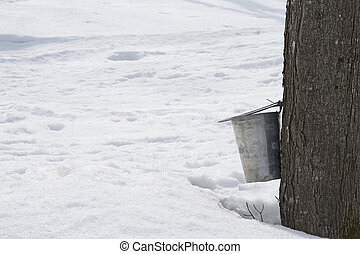 Pail for collecting maple sap attached to a tree, and lots...