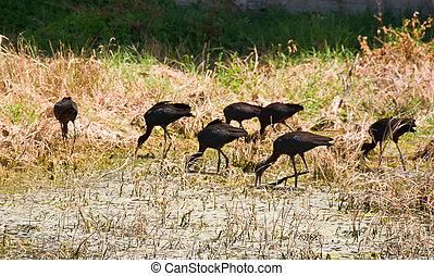 wild birds through lens