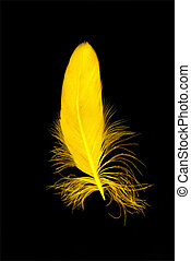 Yellow feather isolated on black background