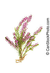 Heather - Sprig of purple heather tied with string