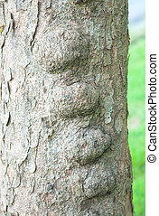 Abnormal shape of bark tree