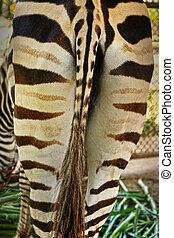 tail of a zebra