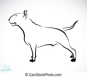 Vector image of an bull terrier on white background