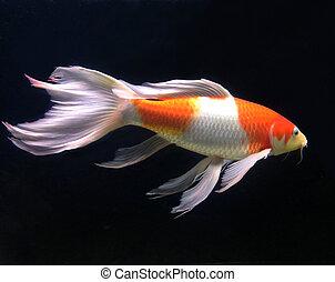 美麗,  fish, 水族館
