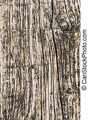 Old Weathered Cracked Wooden Plank Surface Texture