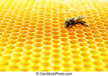 Bees honey cells - Close up view of the working bees on...