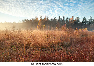 morning sunlight and mist during autumn indian summer -...