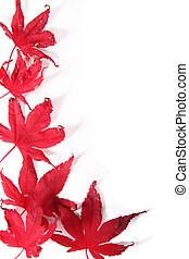 Withering Leaves - red leaves withering with the change of...