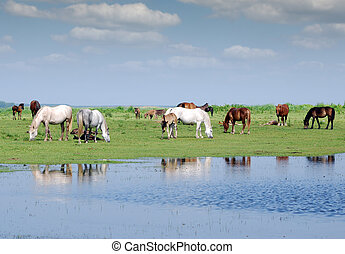 herd of horses on pasture by river