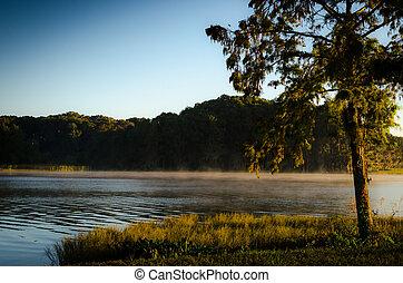 Morning Lake Fog
