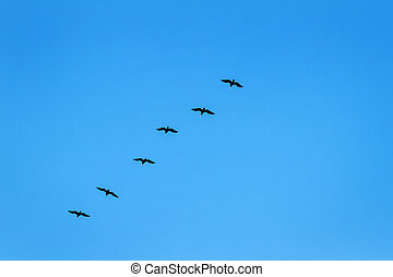 Körvonal, repülés, kormoránok