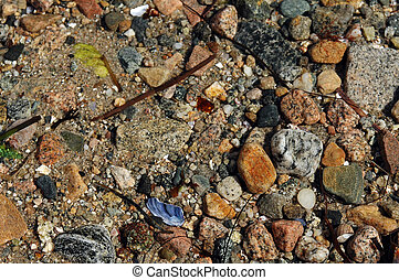 Pebbles and Shells in a Tidal Pool - Colorful pebbles, and...