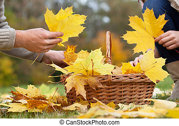 Colorful leaves - People collecting colorful leaves to...