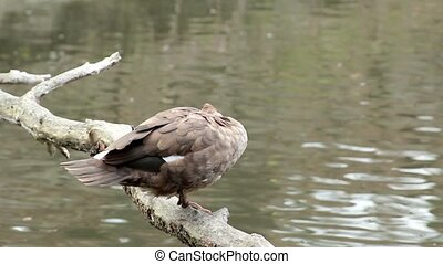 lonely bird on a pond - Beautiful lonely bird on a tree in...