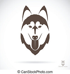 Vector image of an dog siberian husky on white background