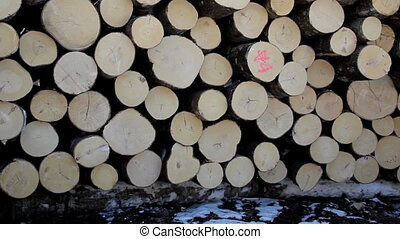 Freshly cut logs neatly piled and arranged so it would...