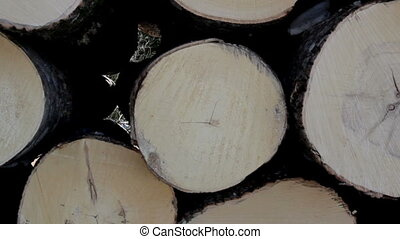 Close-up image of the wood end of the logs that are freshly...