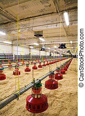 poultry farm - The modern and new automated integrated...