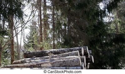 Big logs are added in the pile of logs that are found near...