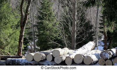 Three more medium sized logs added to the pile of logs