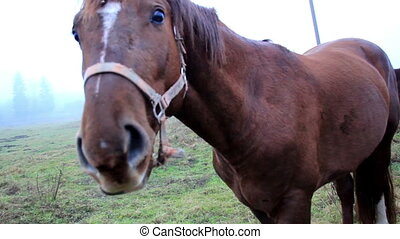 Horse chewing on something then bowing down to eat more grass