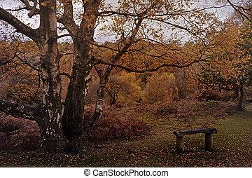 Autumn on Barlaston Downs - The Autumn colours on Barlaston...