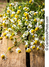 Chamomile - Chamomile flowers on a wooden surface