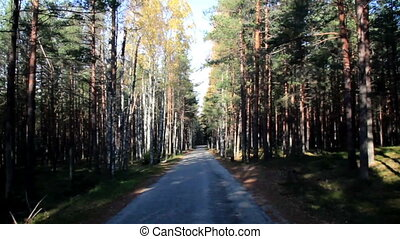 Passing the forrest full of trees - Passing the forest full...
