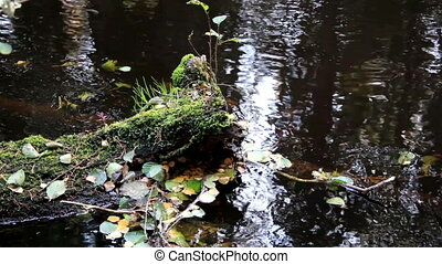 Leaves floating in the water - Leaves floating in the...