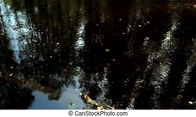 Tiny leaves floating on water and is following the current...