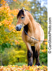Beautiful horse in autumn - Horse standing in autumn forest