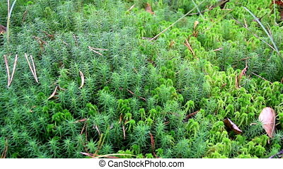 Overhead view of the green shrubs bog swamp - Overhead view...