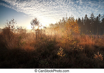morning sunshine over autumn swamp with birch trees,...