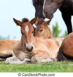 Foal lying on grass