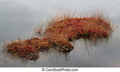 Piece of land with bog swamp grass surrounded by water -...