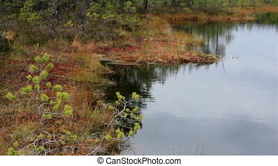 Lake within the forest on bog swamp