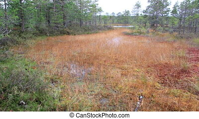 Large area occupied by bog swamp marsh land where you can...