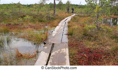 Wooden trail in bog swamp marsh land where people can walk...
