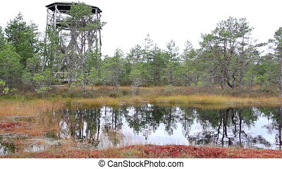 Tree house found near the bog swamp marsh land - Tree house...