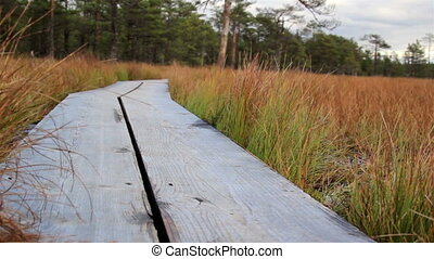 Trail in the bog swamp marsh land is made of wood - Trail in...