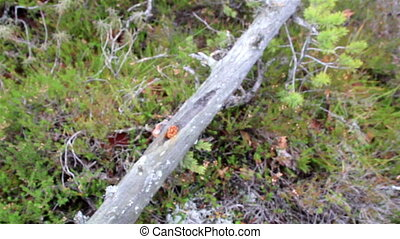 Small flower found on the crack of the tree on bog swamp -...
