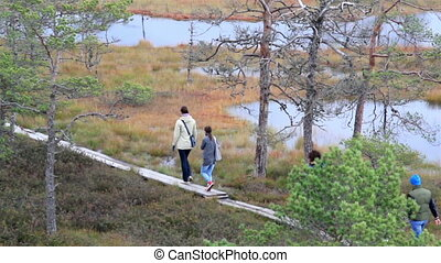 Five people walking on the wooden trail on bog swamp