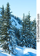 Winter mountain landscape with snowy spruce trees on slope...